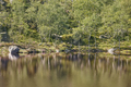 Norwegian summer landscape with forest and lake. Preikestolen route. Horizontal