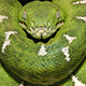 Anaconda84