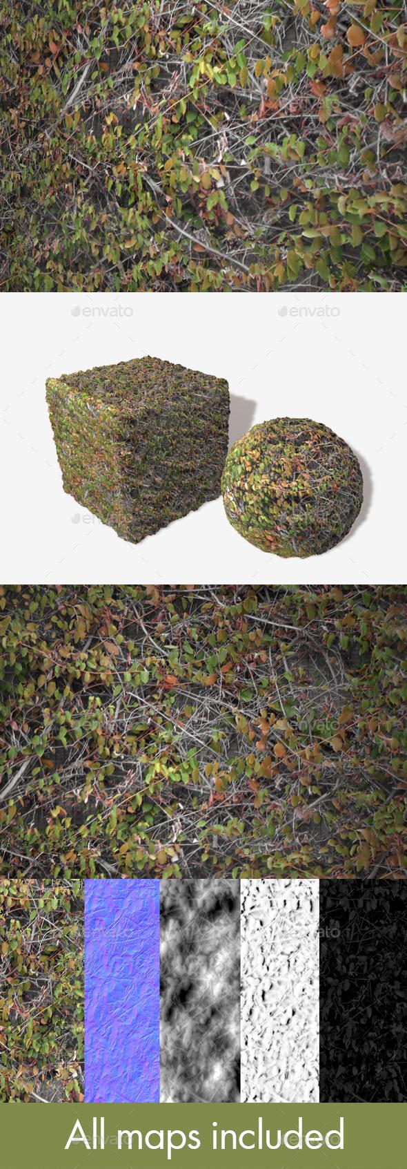 3DOcean Autumn Wall Climbers Seamless Texture 20014295