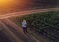 Farmer using drone in sugar beet crop field