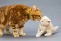 Cat and a small kitten
