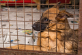 Sad  dogs in a cage of a shelter