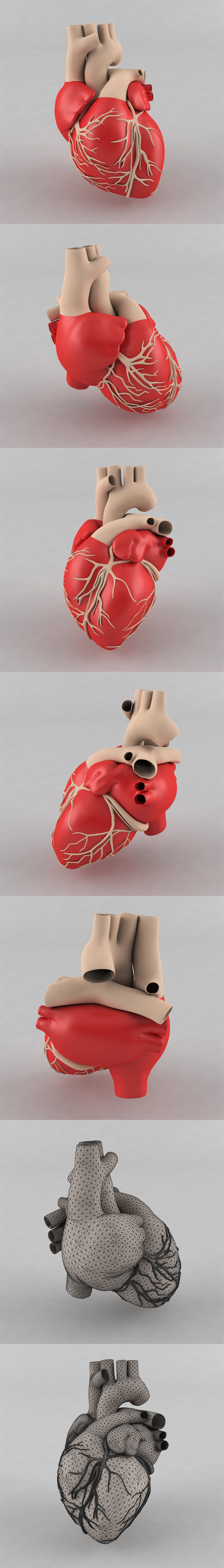3DOcean Human Heart 20022155