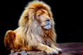 Glowing lion portrait