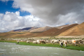 Sheeps and goats grazing on the riverbank in Tibet