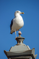 Seagull sitting on the top of a lamp
