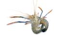 Fresh shrimps,prawns isolated