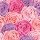 Roses Seamless