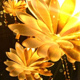Gold Flowers Background