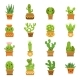 Desert Plants. Cactus in Pots, Vector Cartoon