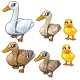 Maturation Stages of Duck, Three Stages of Growth