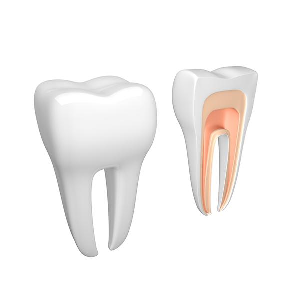 3DOcean Tooth dental 20092762