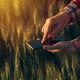 Download Agronomist using smart phone app to analyze crop development from PhotoDune