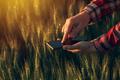 Agronomist using smart phone app to analyze crop development