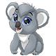 Bear Koala