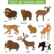 Forest and Mountain Animals Isolated Vector Set