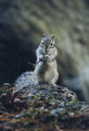 little chipmunk standing on fallen tree and eating