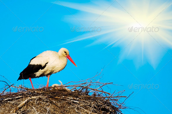stork nest - Stock Photo - Images