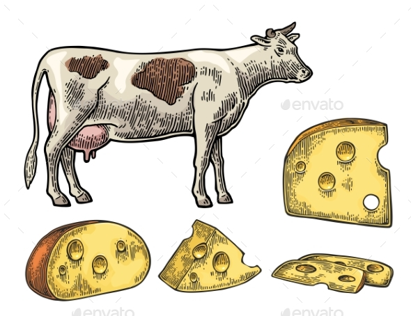 Pieces of Cheese and Dairy Cow