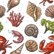 Seamless Pattern Sea Shells Coral and Crab