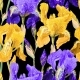 Floral Pattern with Iris Flowers