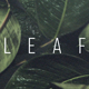 Leaf Transition