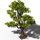 Plant - Windy Grassland Trees 03