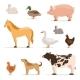 Different Domestic Animals on Farm.