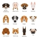Different Dogs. Vector Illustrations Set Isolate