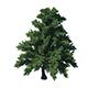 Plant - Pine 36