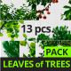 Leaves of Trees Pack