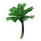 Plant - Coconut Tree 32