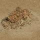 Barracks - Desert Stones - Crushed Stone 02