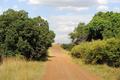Road in savannah in the National park of Kenya