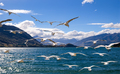 Flying flock of white seagulls with lake and mountains background