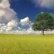 Green Tree on Field Windy Cloudy Sky