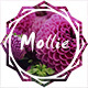 Mollie - Beautiful and Responsive WordPress Blog Theme