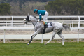 Horse race training. Competition sport. Hippodrome. Speed background. Jockey