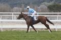Horse race training. Competition sport. Hippodrome. Animal background