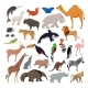 Big Vector Set with Wild Animals Isolate