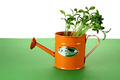 Young Plants in Watering Can