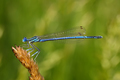 Dragonfly on a plant