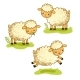 Cartoon Sheep Set