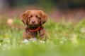 Little dog sitting in the garden