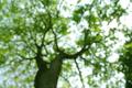 Tree blured background