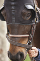 Race horse head with blinkers. Paddock area. Vertical