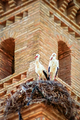 Storks On Church Tower