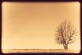 Single Tree in the field