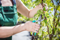 Women gardener cutting tree branch.