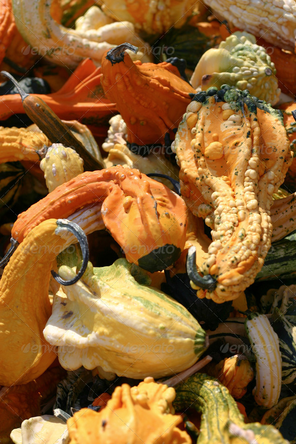 Fall Squash - Stock Photo - Images